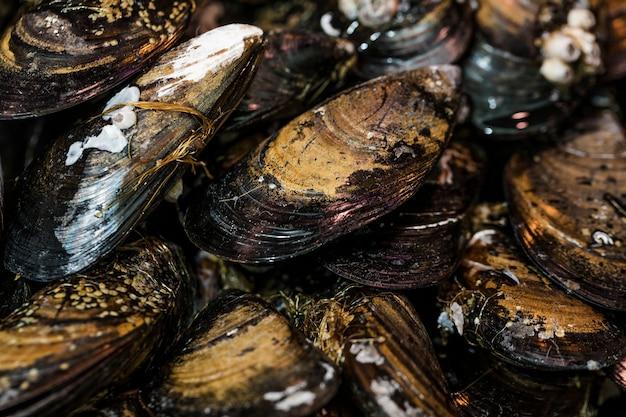 Крупный план свежих черных моллюсков