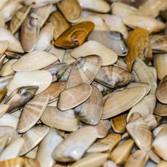 Крупным планом кучу свежих моллюсков