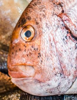 赤の新鮮な魚のクローズアップ