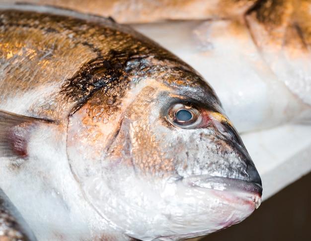 ショップで新鮮な魚のクローズアップ
