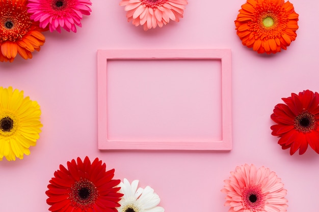 Розовый макет в рамке с цветами герберы
