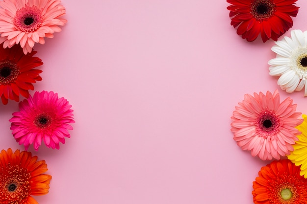 ガーベラヒナギクとピンクのコピースペースの背景