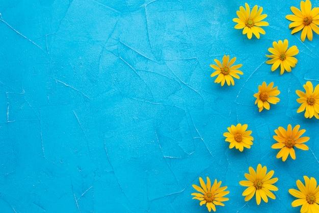 青の背景にスペインのカキアザミの花のフレーム
