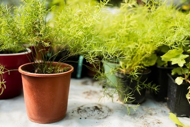 鉢植えの植物のクローズアップ