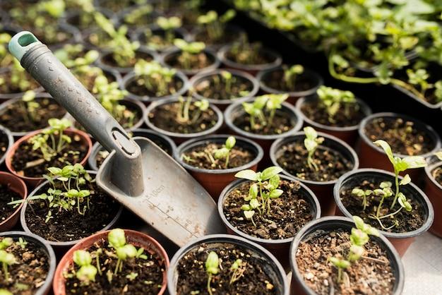 鉢植えの植物とシャベルの高角度