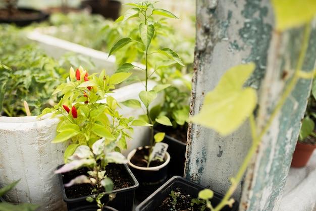 黒い鍋に植物のクローズアップ