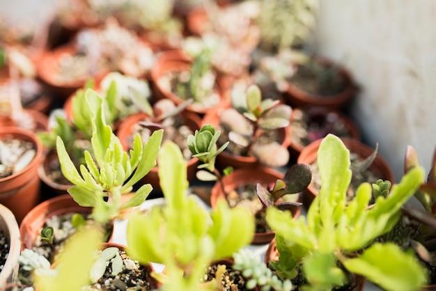 茶色の鍋に植物のクローズアップ