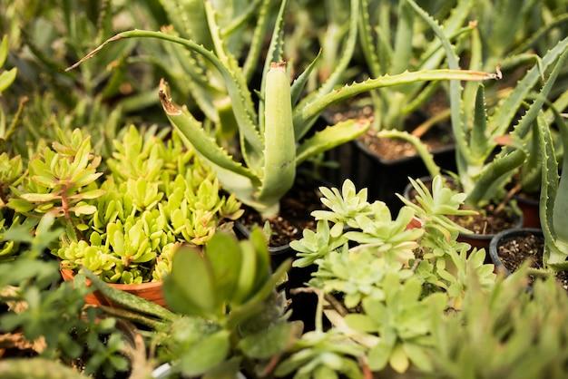 ポットの緑の植物のクローズアップ