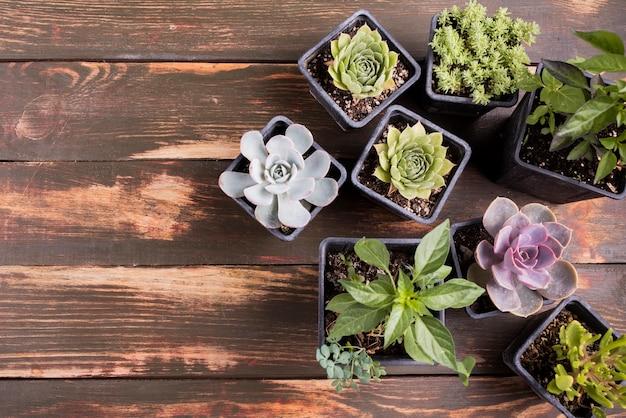 コピースペースを持つ植物の平面図