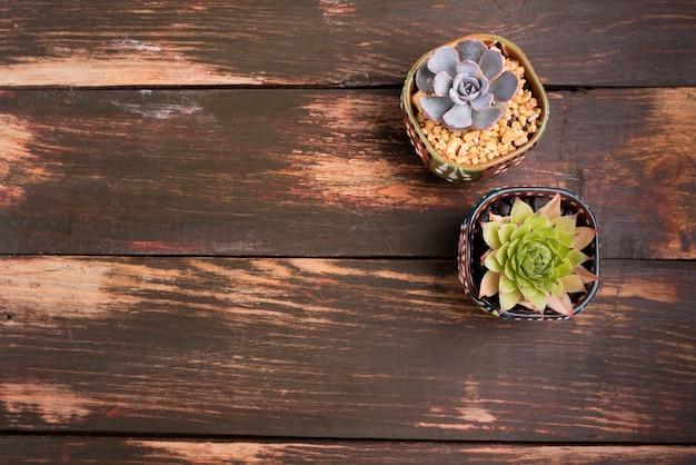 コピースペースを持つ木製テーブルの上の植物