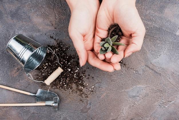 小さな植物を保持している女性のトップビュー