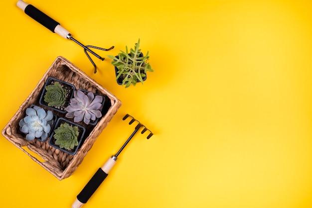 植物とコピースペース付きバスケット