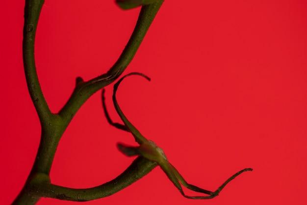 赤の背景にトマトの枝