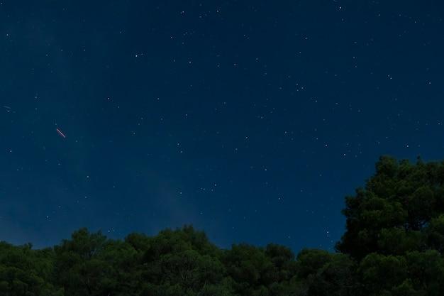 青い夜空と森