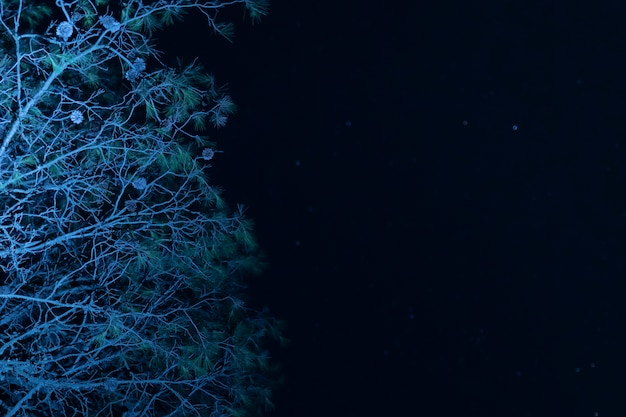 星空とローアングルツリー