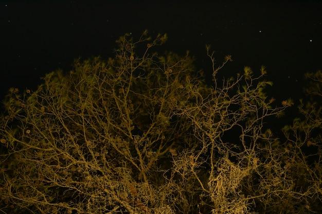 暗い夜空と背の高い木