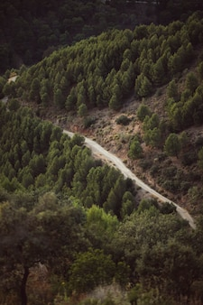 Высокий вид на лесной дороге между природным ландшафтом