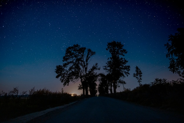 Красивые деревья посреди дороги ночью