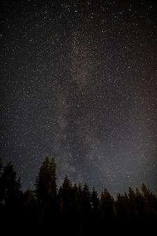 常緑樹の森と真夜中の星空