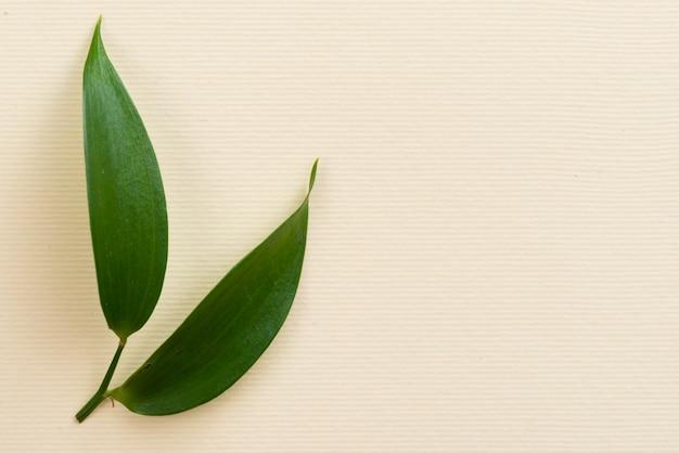 コピースペースを持つテーブルにオリーブの葉