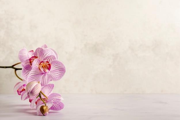美しいピンクのスパ花