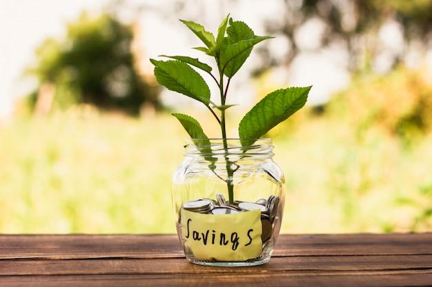 貯蓄と小さな木の中の瓶
