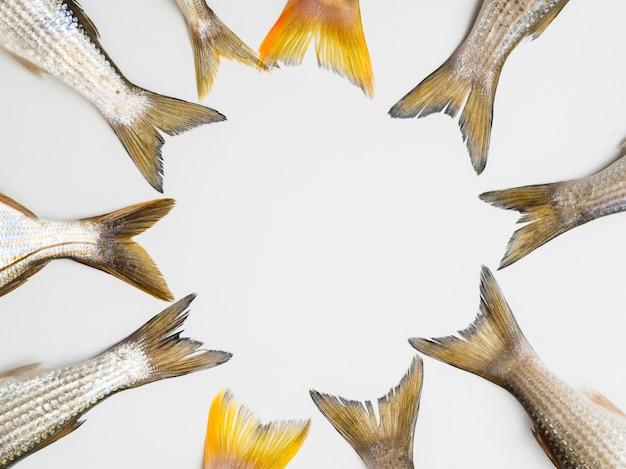 トップビュー新鮮な魚の尾フレーム