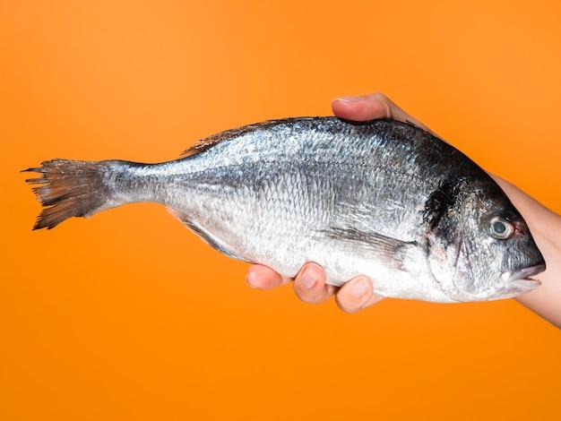 新鮮な魚を持っているクローズアップ手