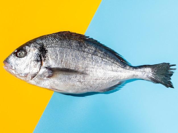 Крупный план сырой рыбы с жабрами