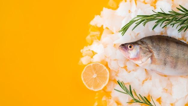 アイスキューブのトップビュー生魚