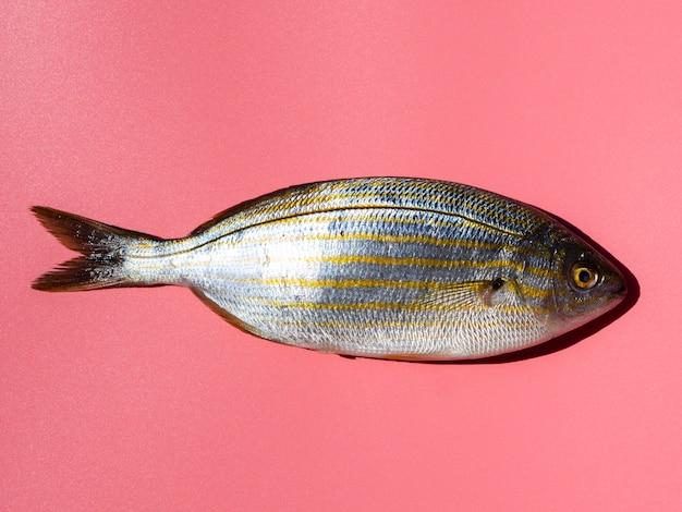 エラと新鮮な魚のクローズアップ