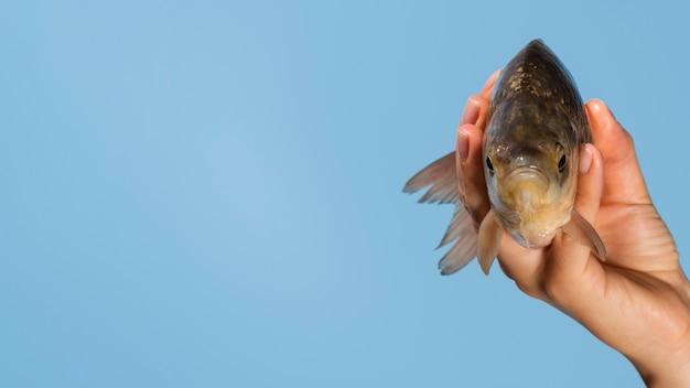コピースペースを持つ魚を持っているクローズアップ手