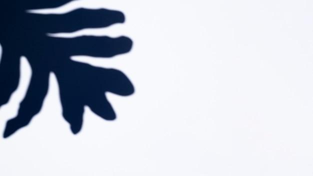 イチジクの形をした影と白い背景