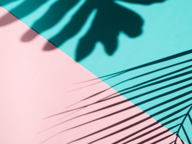 Фикус листает тени на голубом и розовом фоне