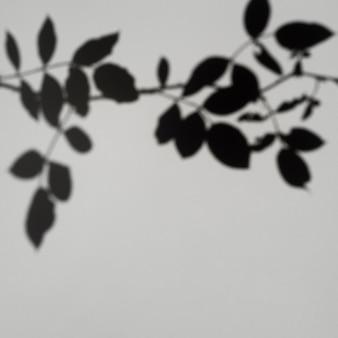 灰色の背景に葉の影