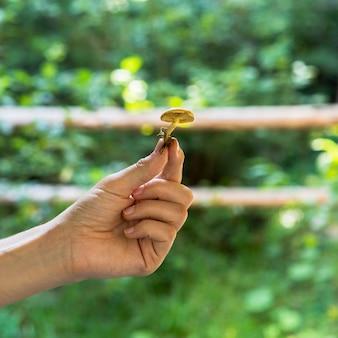 Вид спереди рука гриб в природе