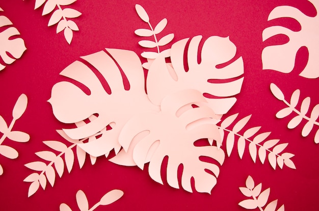 ピンクの葉とモンステラのトップビュー