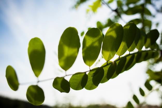 外の美しい日に緑の枝