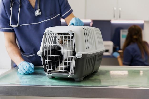 Врач крупным планом с кошкой в клетке
