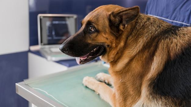 獣医クリニックでクローズアップのかわいい犬