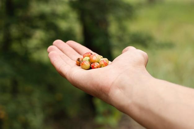 Лицо, занимающее лесные ягоды в руке