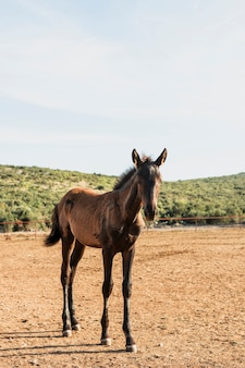 芝生のフィールドで純血種の馬の子馬