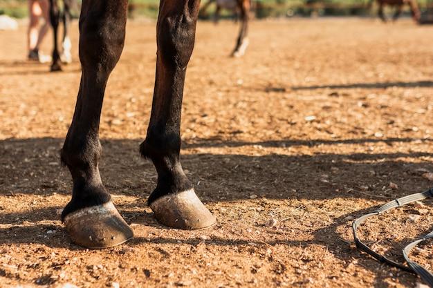 馬の足のクローズアップ