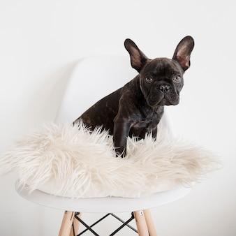 かわいい小さな犬の肖像画