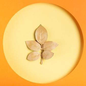 紙サークルコンセプト内の黄金の葉