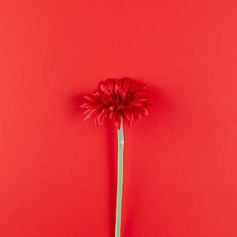 Красивый цветок на красном фоне