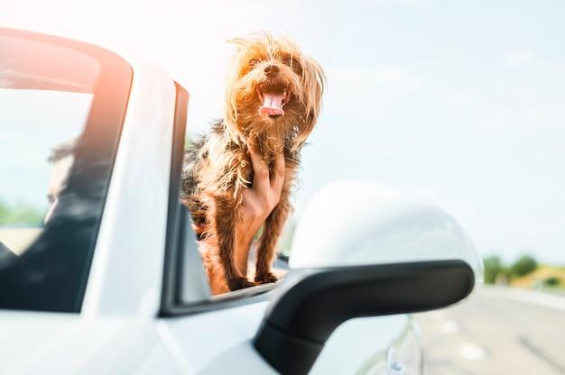 幸せな犬旅行のクローズアップ