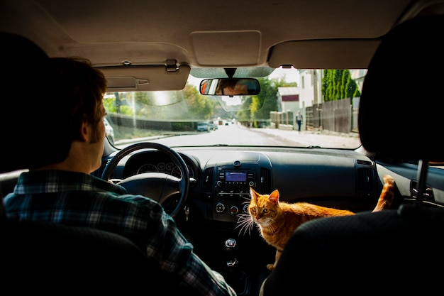 Мужчина за рулем с красивой кошкой рядом с ним