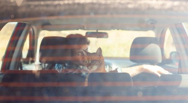 Вид сзади мужчина держит кота в машине