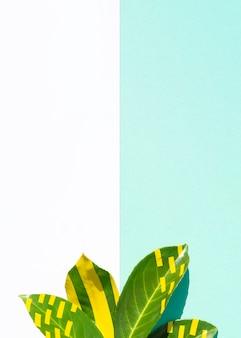 対照的なコピースペースの背景を持つイチジクの葉